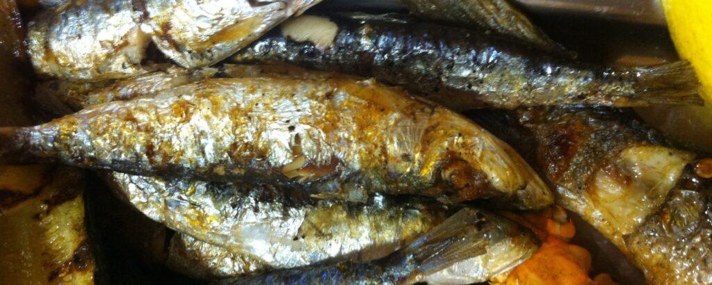 konoba skojera trpanj sardines